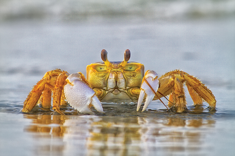 How to fish for crabs wrightsville beach nc for How to fish from the beach